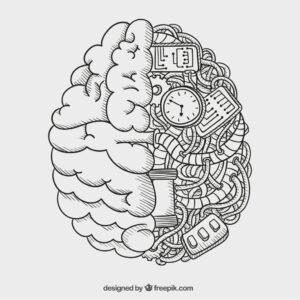 La PNL nos permite utilizar ambos hemisferios de manera integrada para una mayor eficacia y creatividad
